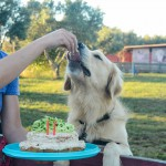 Westley's Dog Birthday Cake Banana Peanut Butter and Tuna Apple www.thefoodiecorner.gr