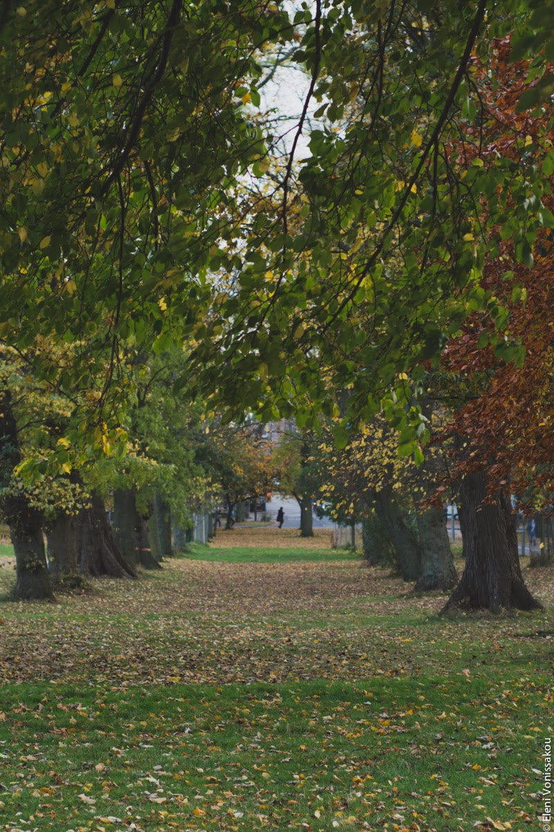 Butternut Squash Soup with Chilli and Whipped Goat's Yoghurt Feta www.thefoodiecorner.gr Photo description: Two long rows of trees lining a grassy part of a park, forming a natural corridor. Autumn leaves on the ground.