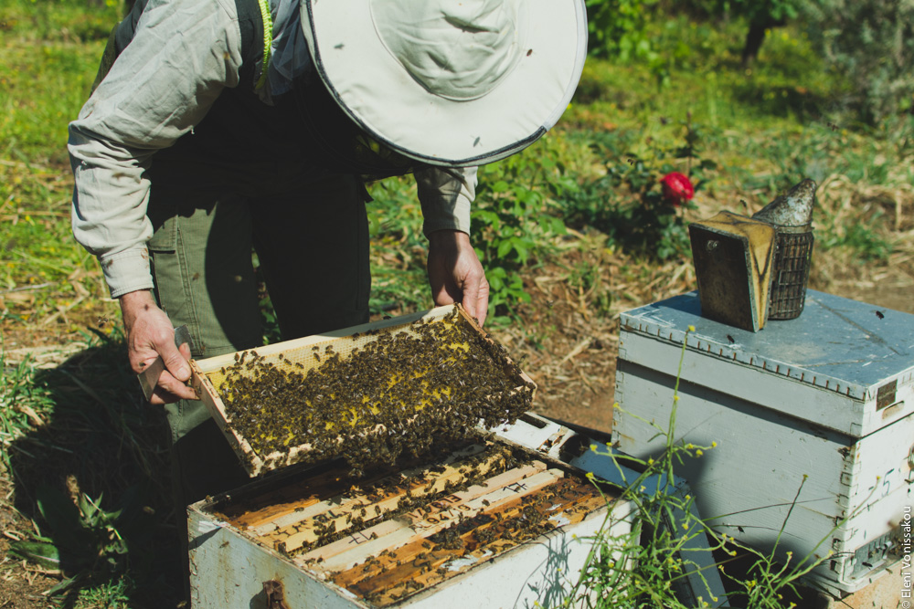 Miliaworkshop2017 www.thefoodiecorner.gr Photo description: A man bending over a beehive, lifting out a frame covered in bees.