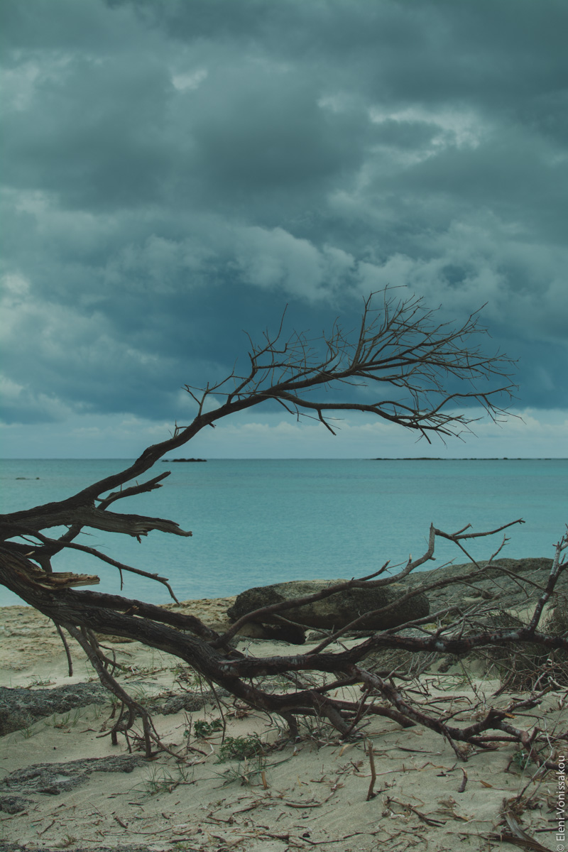 Miliaworkshop2017 www.thefoodiecorner.gr Photo description: The beach and sea, seen through the dead fallen branches of a tree. Light coloured sand, turquoise waters and a dramatic sky with dark heavy clouds in the distance.