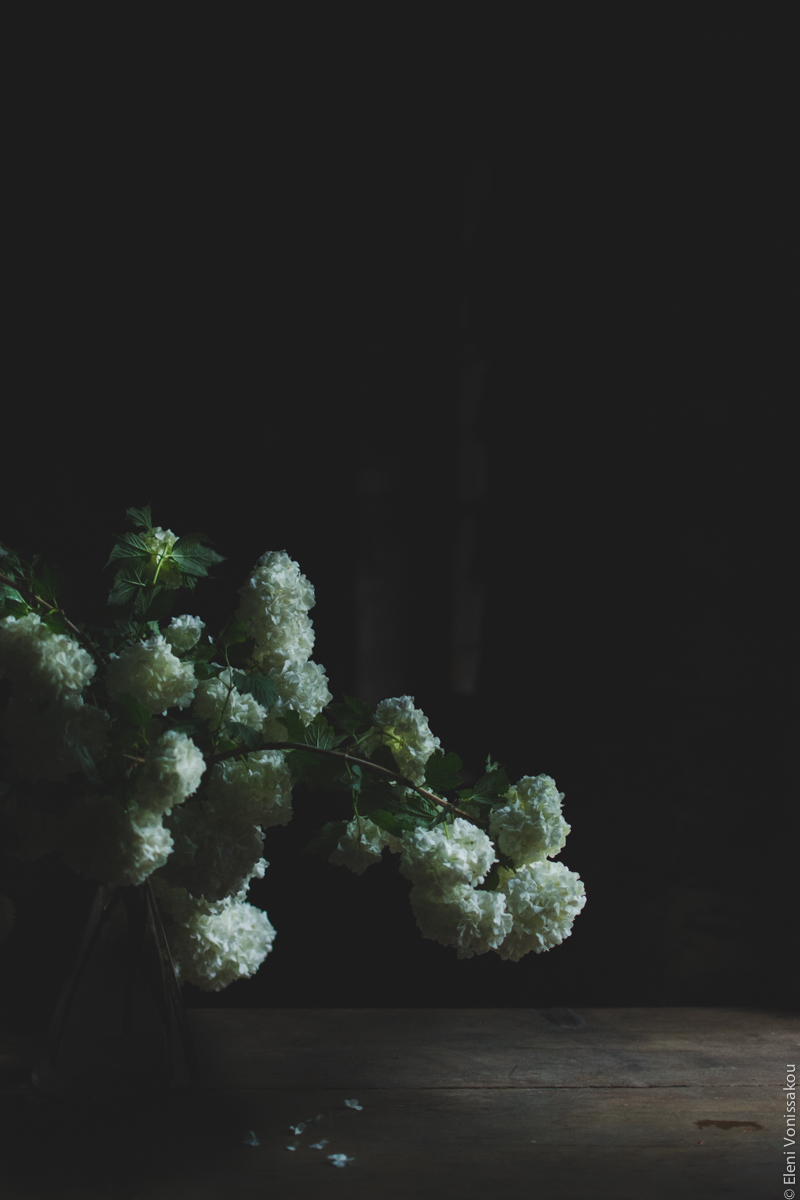 Miliaworkshop2017 www.thefoodiecorner.gr Photo description: Side view of big white flowers against a very dark background. The side lighting is making the white buds stand out.
