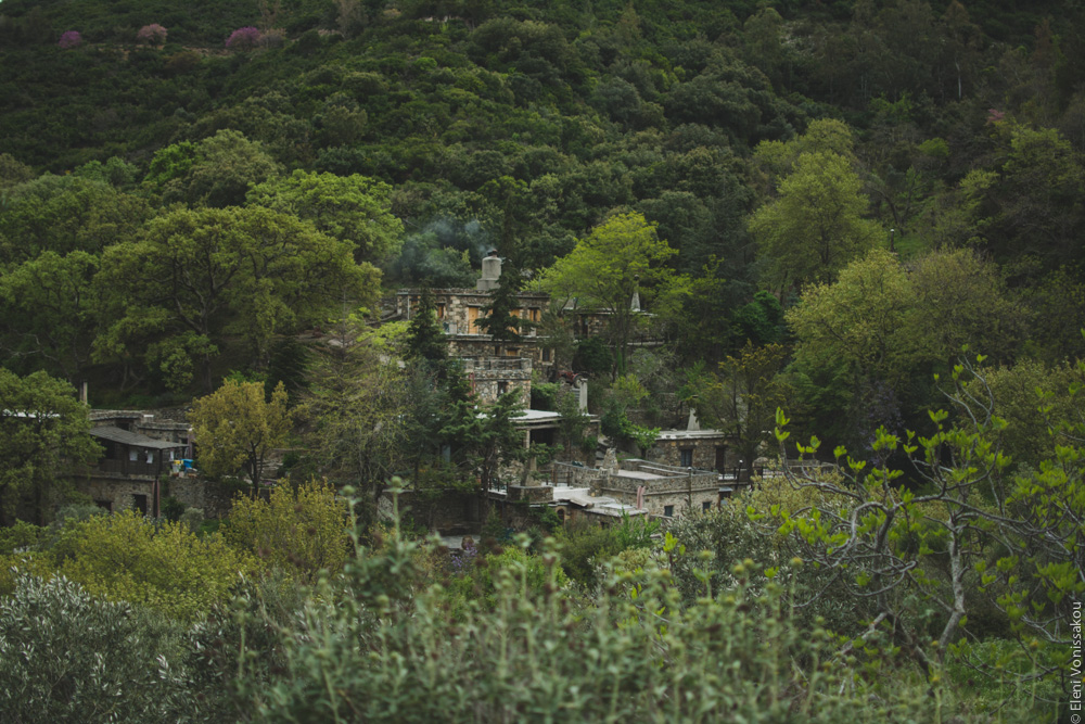 Milia Workshop 2017 – A long overdue recap. Part 1. www.thefoodiecorner.gr - Photo description: The stone buildings of Milia nestled among dense trees and bushes on a mountainside. View from the opposite mountainside.