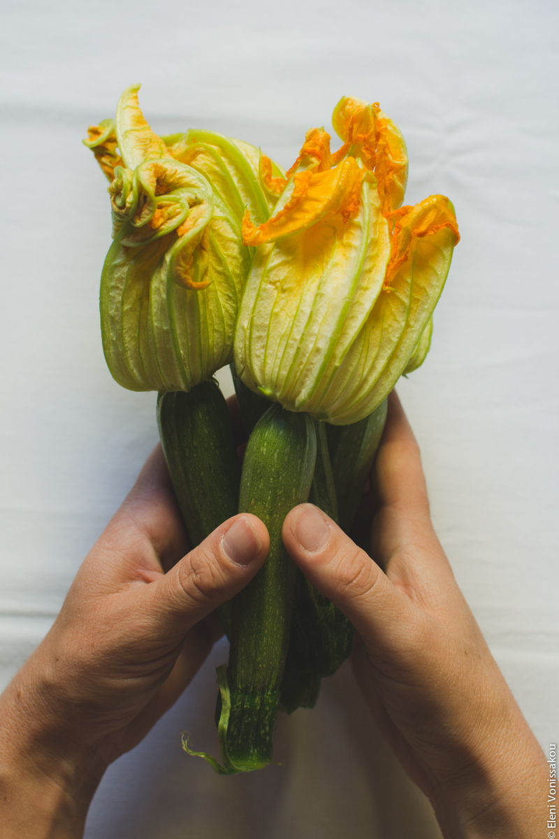 Whole Wheat Courgette Pasta with Courgette Flowers www.thefoodiecorner.gr Photo description: Hands holding a bunch of 3 courgettes with large flowers still attached, against a white background.