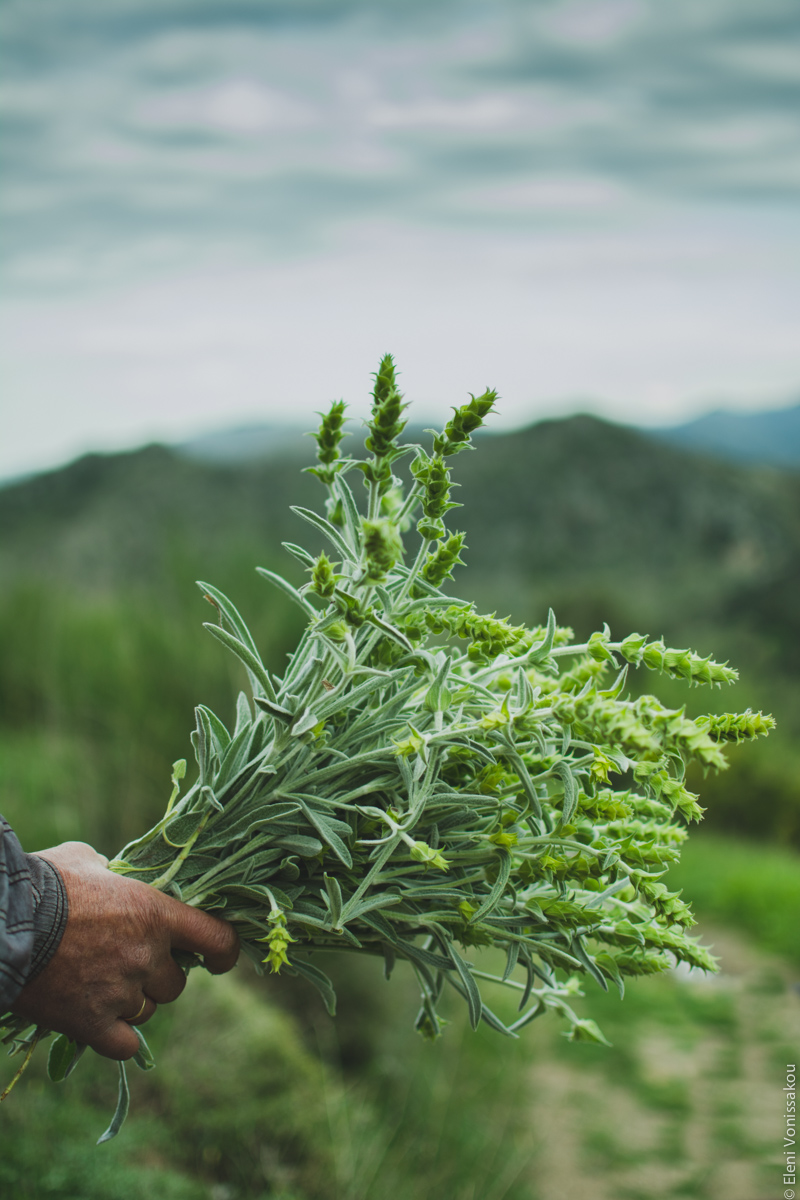 Milia Workshop 2017 – A long overdue recap. Part 1. www.thefoodiecorner.gr - Photo description: A hand holding a bunch of pretty green herbs. Mountainous scenery visible in the blurry background, with gray clouds in the sky.